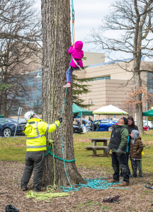 Tree Climbing for Kids